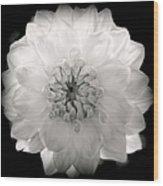 White Magic Wood Print by Karen Wiles