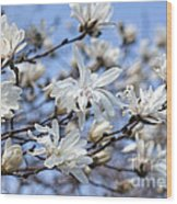 White Magnolia Magnificence Wood Print