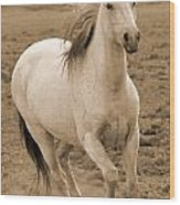 White Mare Approaches Number One Close Up Sepia Wood Print