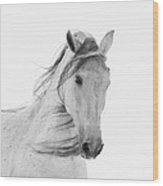 White Mare In The Snow Wood Print