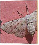 White Moth And Eggs Wood Print