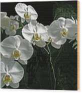 White Moth Orchid Phalaenopsis And Ferns Wood Print