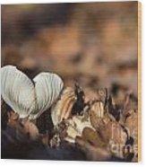 White Mushroom Long Gills Wood Print