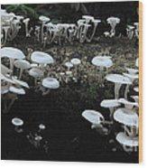 White Mushrooms Amazon Jungle Brazil 1 Wood Print