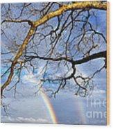 White Oak And Double Rainbow Wood Print