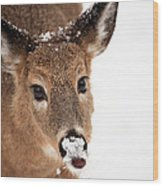 White On The Nose Wood Print