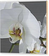 White Orchid 1b Wood Print