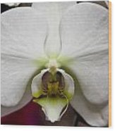 White Orchid Close Wood Print by Timothy Blair