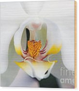 White Orchid Wood Print