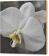 White Orchid Wood Print by Elisabeth Witte