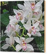 White Orchid In Full Bloom Wood Print