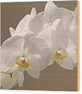 White Orchid Photograph Wood Print