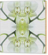 White Orchid With Stems Wood Print