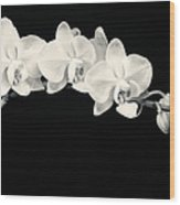 White Orchids Monochrome Wood Print