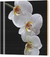 White Orchids On Black Vertical Wood Print