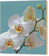 White Orchids On Ocean Blue Wood Print