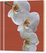 White Orchids On Terracotta Vdertical Wood Print
