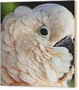 White Parrot Wood Print