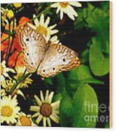 White Peacock Butterfly I I I Wood Print