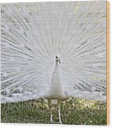 White Peacock - Fountain Of Youth Wood Print