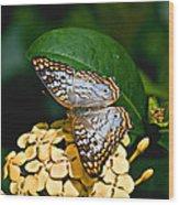 White Peacock Ins 18-1 Wood Print