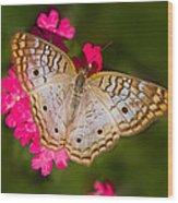 White Peacock Wood Print