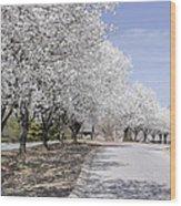 White Pear Trees Casting Shadows Wood Print
