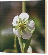 White Peddals Wood Print