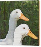White Pekin Duck Wood Print