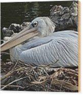 White Pelican 1 Wood Print