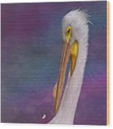 White Pelican Wood Print by Hazel Billingsley