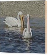 White Pelican Pair Wood Print