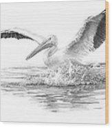 White Pelican Pencil Portrait Wood Print