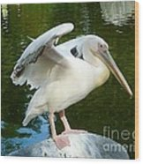 White Pelican Standing  Wood Print