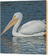 White Pelican Swimming Wood Print