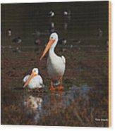 White Pelican Visitors To Gilbert Arizona Wood Print
