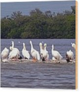 White Pelicans And Little Friends Wood Print