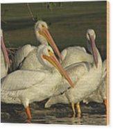 White Pelicans Wood Print