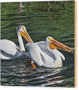 White Pelicans Fishing For Trout Wood Print by Kathleen Bishop