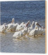 White Pelicans On Sanibel Island Wood Print