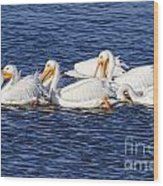 White Pelicans Wood Print