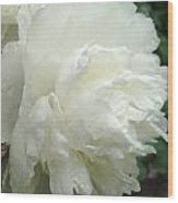 White Peony After Rain Wood Print