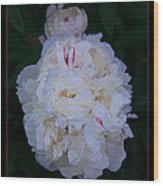 White Peony And Companion Abstract Flower Painting Wood Print