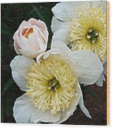 White Peony Flowers Series 2 Wood Print