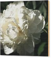 White Peony In Spring Wood Print
