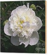 White Peony Watercolor Effect Wood Print