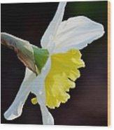 White Petaled Daffodil Wood Print