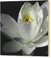 White Petals Aquatic Bloom Wood Print by Julie Palencia