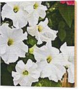 White Petunias Wood Print