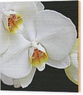 White Phalaenopsis Orchid Flowers Wood Print